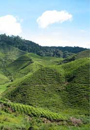 cameron highlands boutique hotel